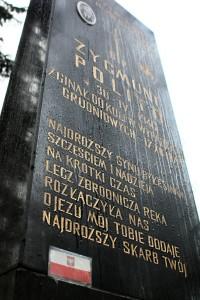 Polito fot. J. Dworakowski (2)